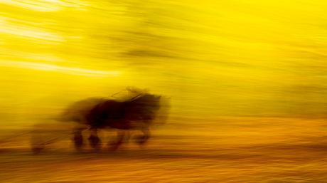 running workhorse