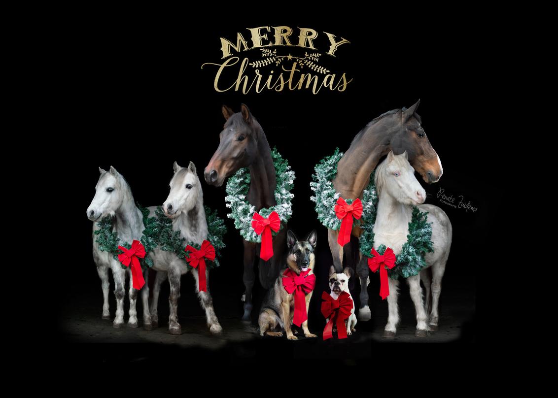 Fluffy Family - Kerstkaartje weer klaar voor dit jaar - foto door RenateZuidemaFotografie op 08-12-2020 - deze foto bevat: paard, hond, pony, kwpn, duitse herder, franse bulldog, welsh pony