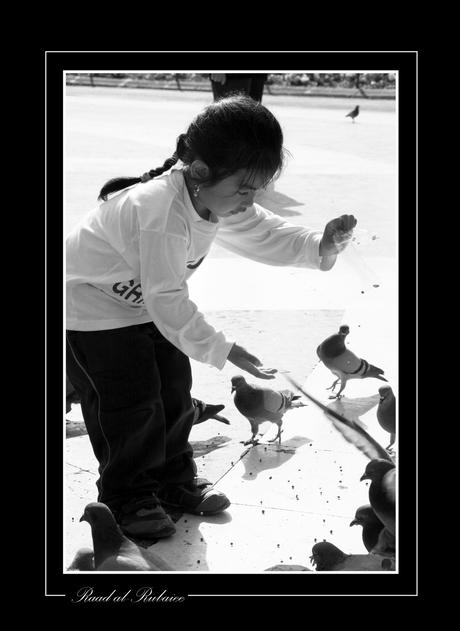 duiven voeren