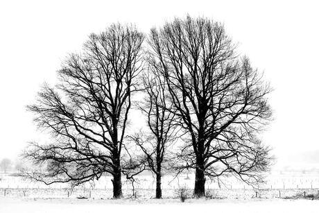 Winters silhouet