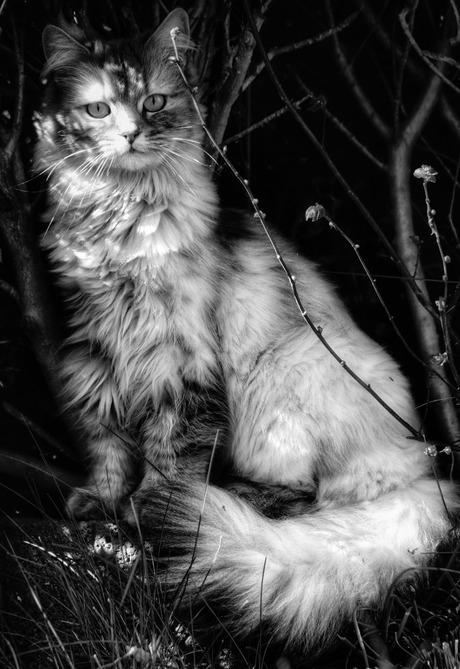 Lilly, zwart/wit