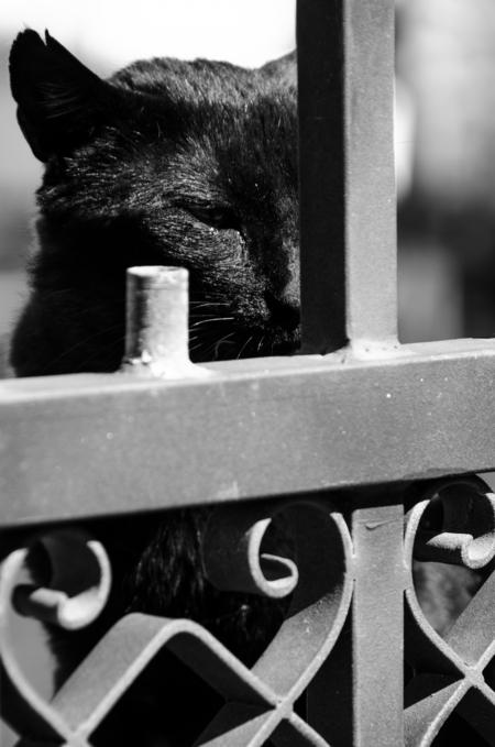 naamloos - terwijl mijn vrouw het zakje voer openmaakt, kijkt deze kat geduldig toe en wacht zijn beurt af. - foto door aschuijffel op 31-05-2013 - deze foto bevat: kat, portugal, algarve, zwart wit
