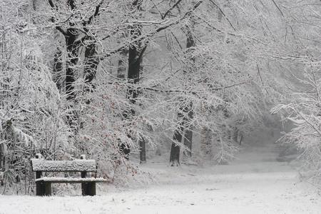 Witte wereld - Een prachtige zondag was het, tijdens de sneeuwbuien een wandeling gemaakt door het bos. - foto door Paul1973_zoom op 16-12-2017 - deze foto bevat: wit, natuur, sneeuw, winter, bos