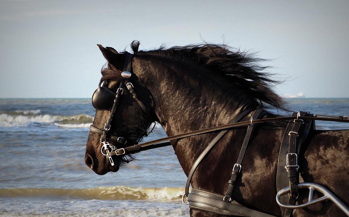 Darky - En een mooie  dag aan het Katwijker strand - foto door pietsnoeier op 01-02-2021 - deze foto bevat: strand, zee, natuur, paard, dieren, katwijk, wildlife, darky