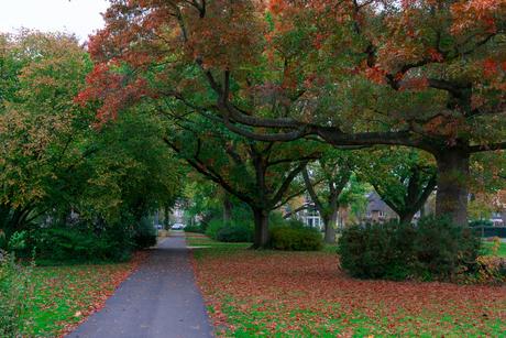 Herfst in Meppel