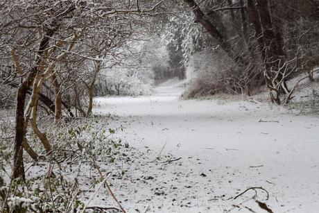 Eerste Sneeuw 3