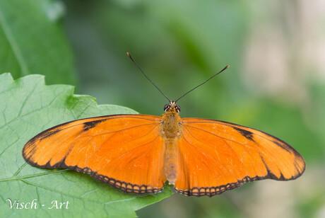 Eindelijk de vlinders 100% MACRODAG