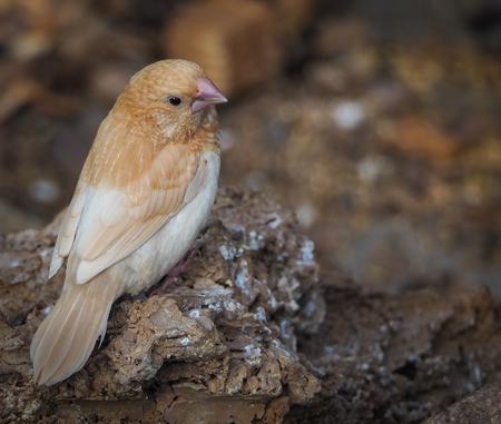 Tropische vogel 3 - Klein vogeltje in de vogelkas van Vlindorado. - foto door PhotoMad op 07-03-2019