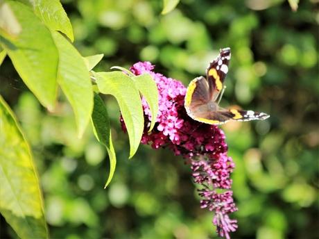 Vlinder in tuin