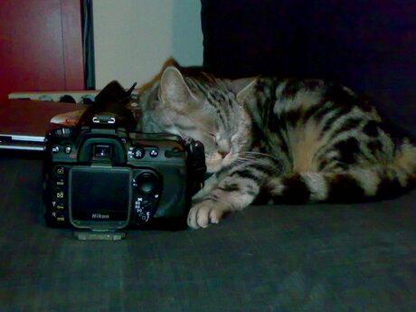 Nikon love