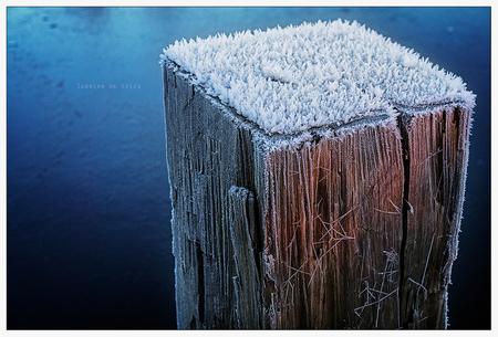 Winterse details - 6-12-2016 - foto door ReflectionsFromWithin op 07-12-2016 - deze foto bevat: kleur, macro, wit, water, rijp, winter, sloot, spinrag, hout, spinnenweb, bevroren, closeup, december, najaar, paaltje, winters, vrieskou, macrofotografie