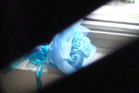blauw rozen