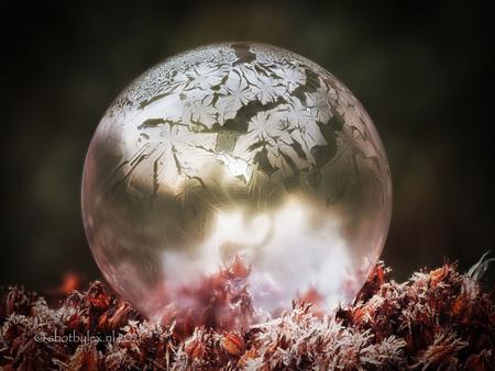 Frozen art - Eindelijk was het weer eens koud genoeg om de zeepbellen te laten bevriezen. Mooi hoe de natuur zijn eigen kunst maakt. - foto door meneerlex op 01-02-2021 - deze foto bevat: paars, rood, macro, bloem, natuur, licht, tuin, winter, zeepbel, vorst, bevroren, bol