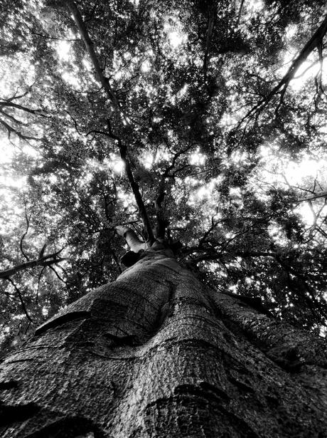 De mysterieuze boom