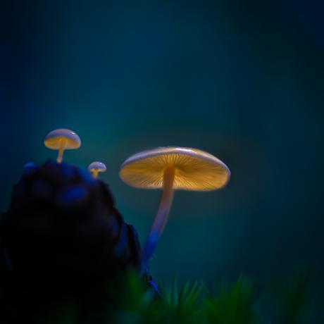 Luminated mushrooms
