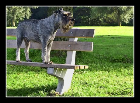 Watch dog!