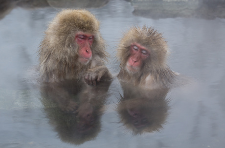 Makake apen