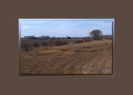 Rietveldje - Riet word geoogst voor het dekken van rieten daken..Hier zo'n rietveld Bij Hoedekenskerke. - foto door Sizzle op 24-03-2010 - deze foto bevat: rietveld, hoedekenskerke, Zuidbeveland