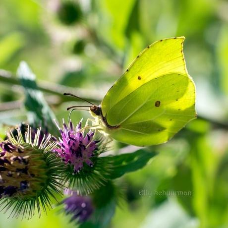 vlinder s.jpg