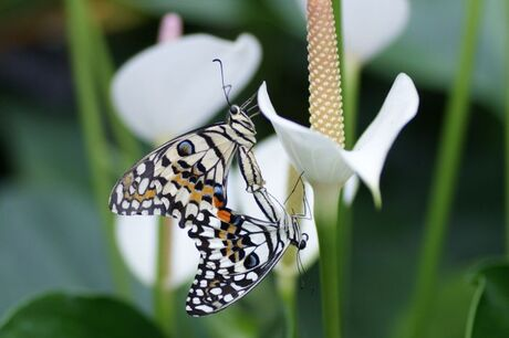 Orchideeenhoeve in Luttelgeest