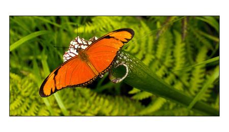 vlinder - in de hortus in Amsterdam  geen idee welke vlindersoort dit is - foto door corvangriet op 28-09-2012 - deze foto bevat: amsterdam, vlinder, hortus