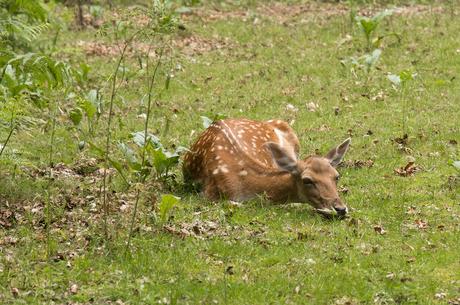 Deer 3