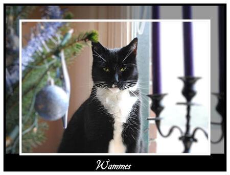 Wammes - Wammes en Smoky hebben nog nèt geen ruzie over wie er nu weer bij de kerstboom mag zitten..... (zie vorige foto in dit album) - foto door spitsoor op 19-12-2009 - deze foto bevat: kerstboom, kat