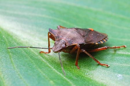 wants - . - foto door kv1 op 22-01-2011 - deze foto bevat: wants, insect