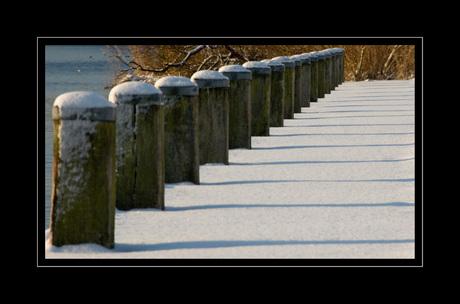 Winter Oostvaardersplassen