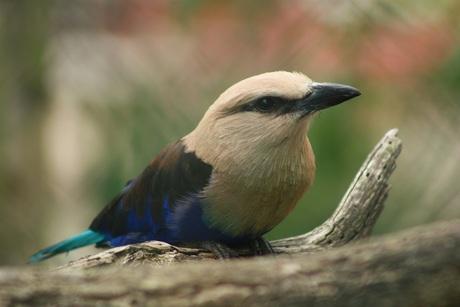 mooie vogel