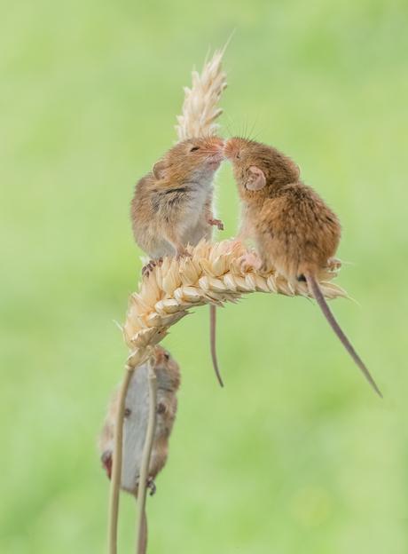Hé wacht op mij, ik wil ook een knuffel!
