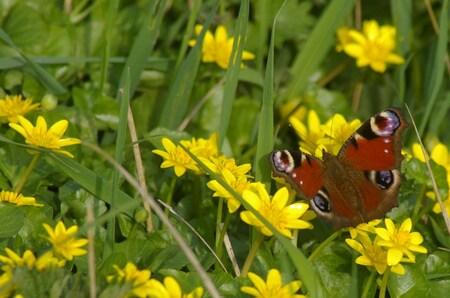 Het geluk aan mijn kant............... - - - foto door marwofoto op 18-04-2009 - deze foto bevat: vlinder, geluk