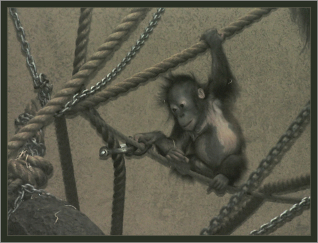 baby orang-oetang