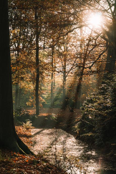 Autumn forest Lochem