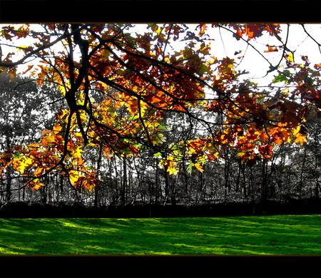 Autum Leaves - Inmiddels alweer een jaar geleden dat ik deze foto heb gemaakt.  Maar omdat het toch wel goed met de tijd van het jaar overeenkomt heb ik hier neer - foto door daniel44 op 15-10-2006 - deze foto bevat: kleuren, boom, bladeren, natuur, herfst, tak, seizoen