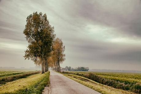 polder Goeree Overflakkee