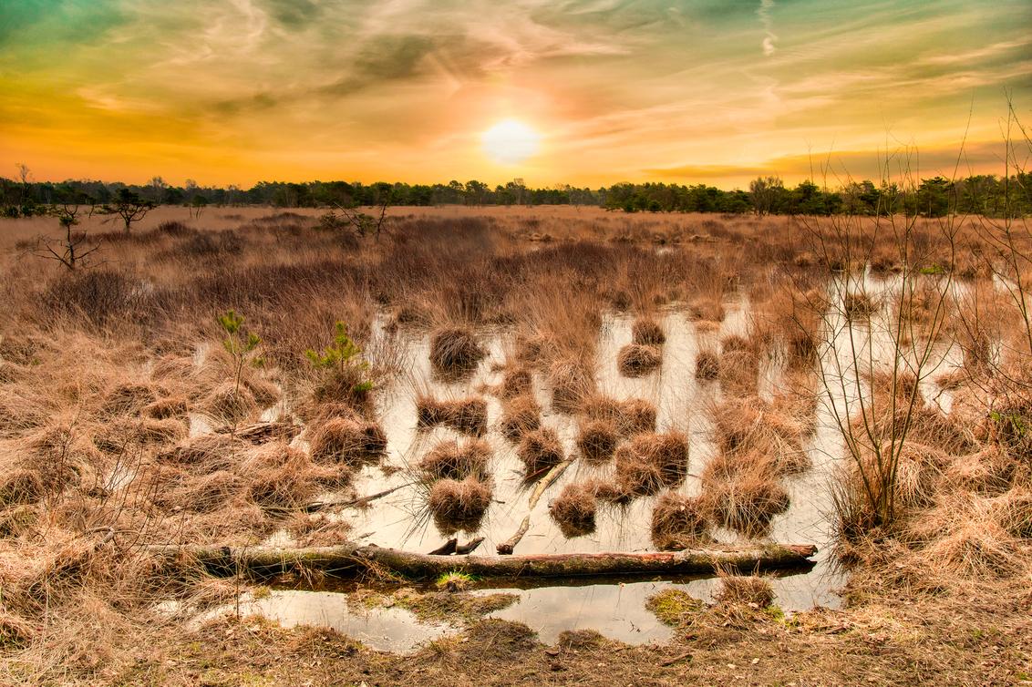 Steenhaarplassen - - - foto door Zendman op 26-02-2021 - deze foto bevat: lucht, water, natuur, licht, landschap, heide, tegenlicht, zonsopkomst, vennen