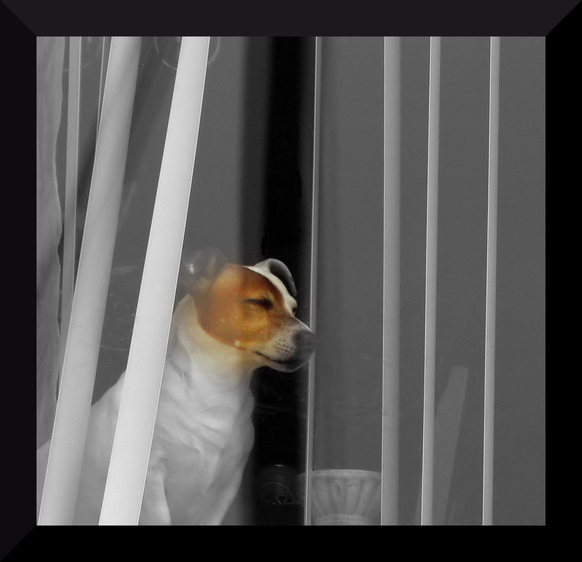 Dog life - - - foto door simonpieter op 25-03-2009 - deze foto bevat: hond