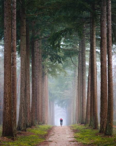De eenzame fietser - Een mistige ochtend in het bos. Toen ik deze mountainbiker het pad op zag fietsen wist ik dat ik alleen nog maar hoefde te wachten tot hij op de perf - foto door MarijnAlons op 24-02-2021 - deze foto bevat: herfst, landschap, mist, bos, bomen, minimalisme, telelens