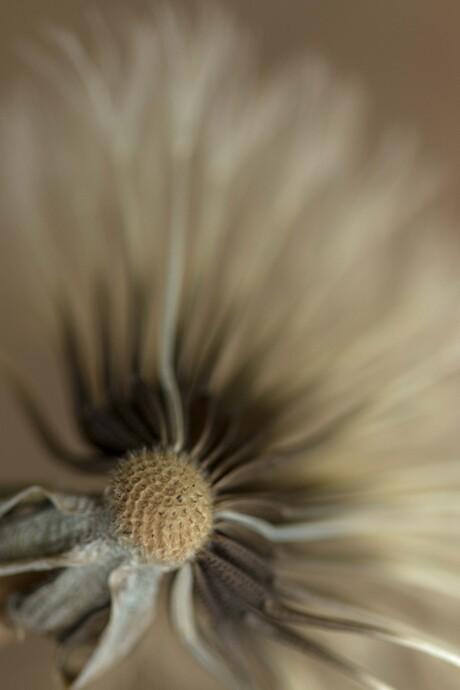 Einde van een bloem.