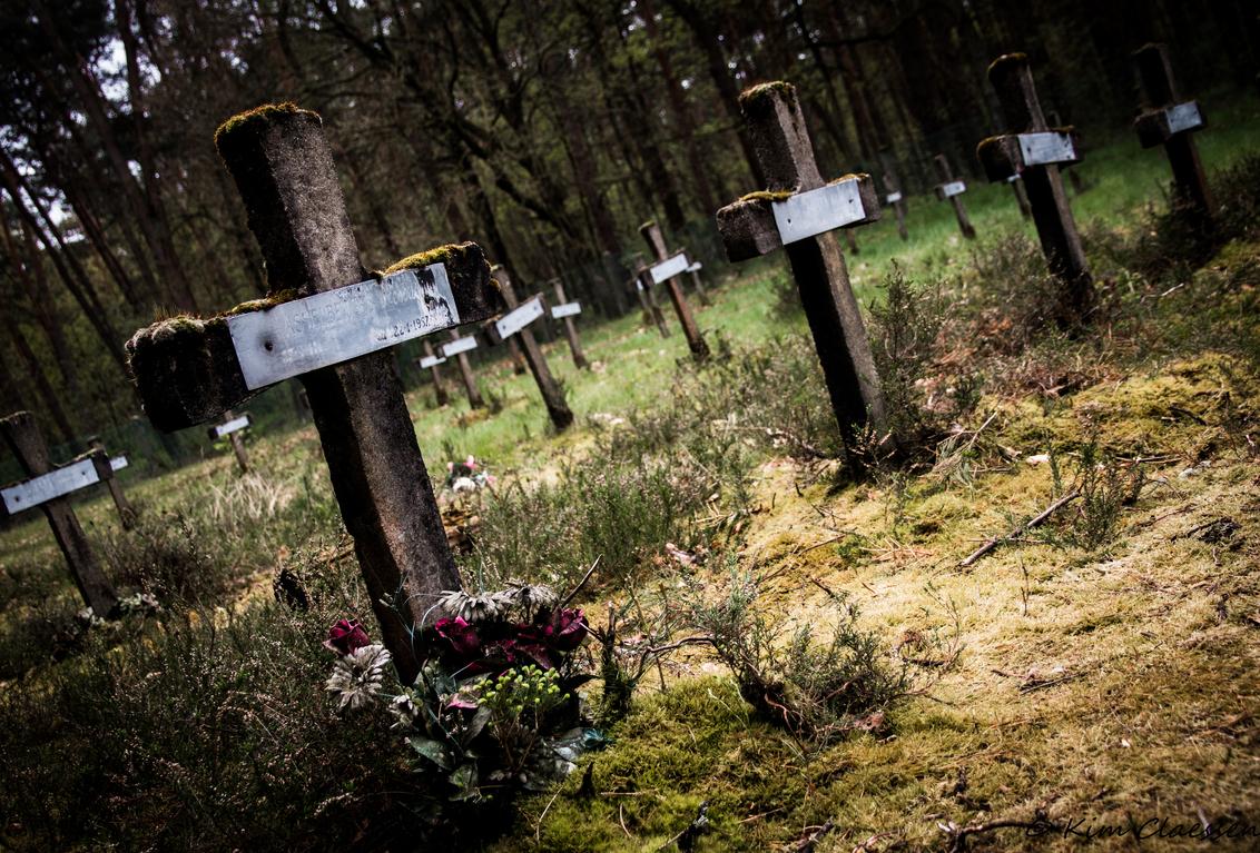 Urbex Kerkhof - Cemetery of the insane - foto door KC78 op 28-04-2015 - deze foto bevat: gras, groen, natuur, geel, landschap, bos, bomen, graven, kerkhof, graf, begraafplaats, belgie, vervallen, urbex, ue, urban exploration, Cemetery of the Insane