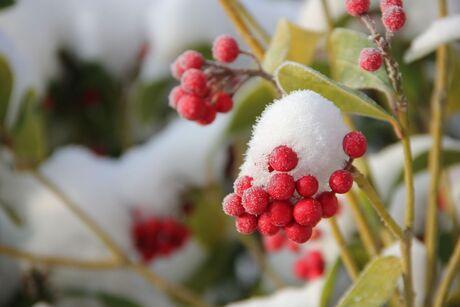 eerste sneeuw 2012