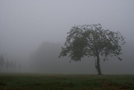 Morgen mist