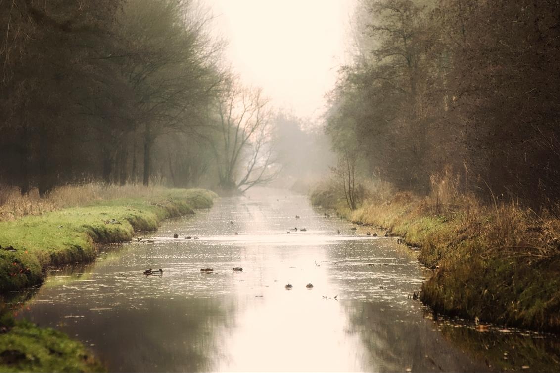 alblasserbos 2958 - - - foto door onne1954 op 01-01-2021 - deze foto bevat: water, natuur, spiegeling, landschap, mist, bos, bomen, rivier, polder