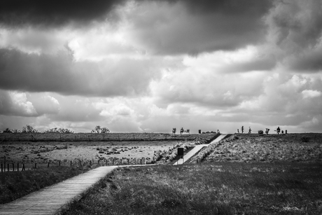 zwarte polder zw