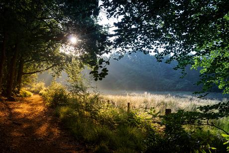 Een vroege zomerochtend in De Pannenhoef