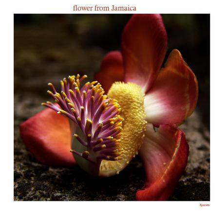 Bloem uit Jamaica