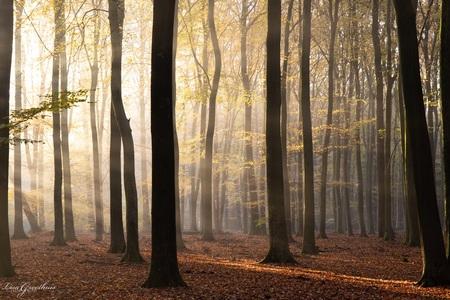 Herfst - - - foto door LGphotography op 09-11-2020 - deze foto bevat: zon, boom, natuur, geel, herfst, mist, bos, nederland, zonneharpen, speulderbos