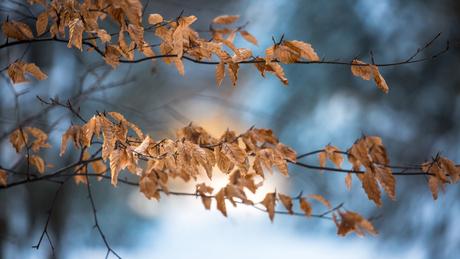 herfstblaadjes in de winter