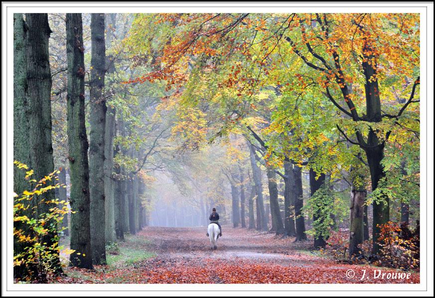 Lage Vuursche - Ook hier ontbrak helaas een zonnetje, maar de ruiter maakt veel goed. - foto door janv2 op 06-12-2013 - deze foto bevat: herfst, paard, beukenlaan, beuk, ruiter, beuken, Lage vuursche